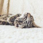 Mädelsschnack l Katze Haustier Gesundheit